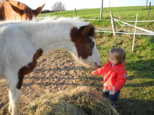 Le plus gentil des poneys