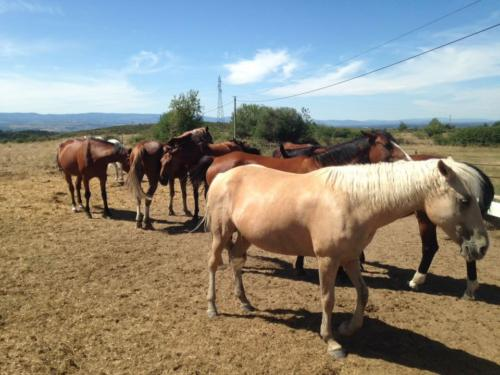 Vacances chevaux club