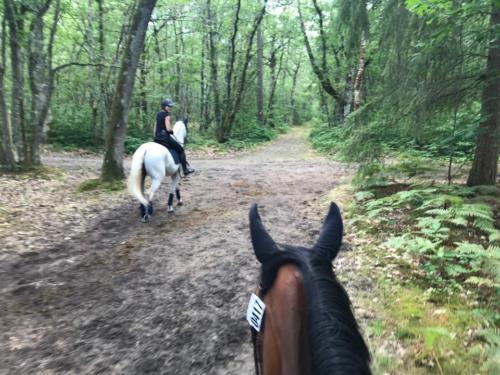 Sortie dans les bois de Lamotte